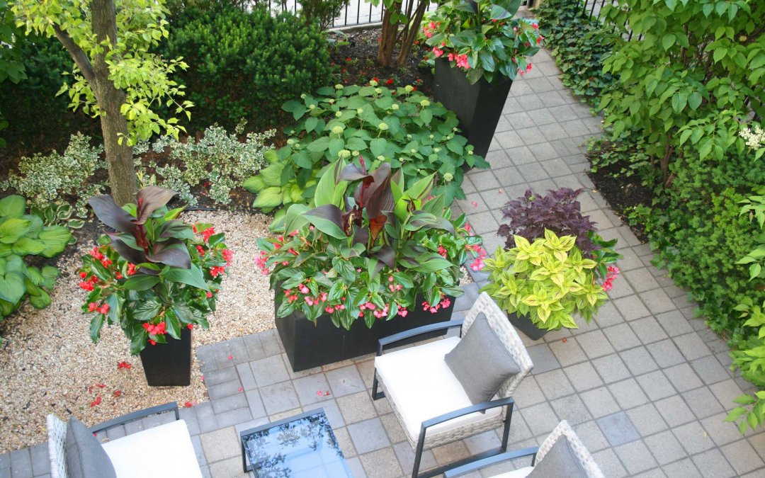 My Urban Garden is in Bloom…
