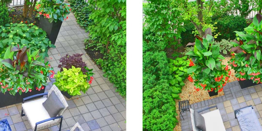 My Urban Garden, Then and Now…